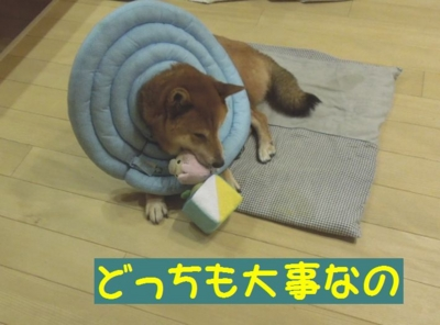 f:id:miyuki1967:20121225112439j:image
