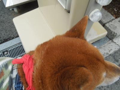 f:id:miyuki1967:20121231092720j:image