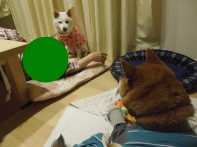 f:id:miyuki1967:20130217193137j:image