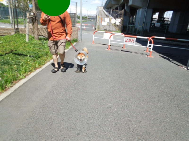 f:id:miyuki1967:20130408112258j:image:w400