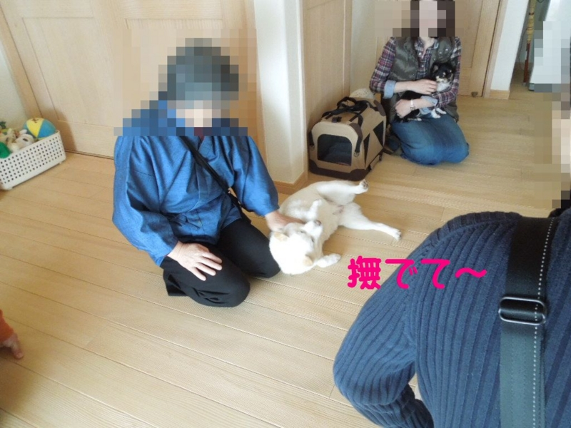 f:id:miyuki1967:20130409112141j:image:w400