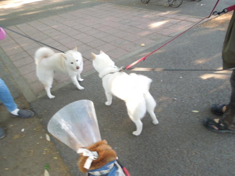 f:id:miyuki1967:20130506164724j:image:w400