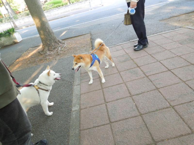 f:id:miyuki1967:20130506164845j:image:w400