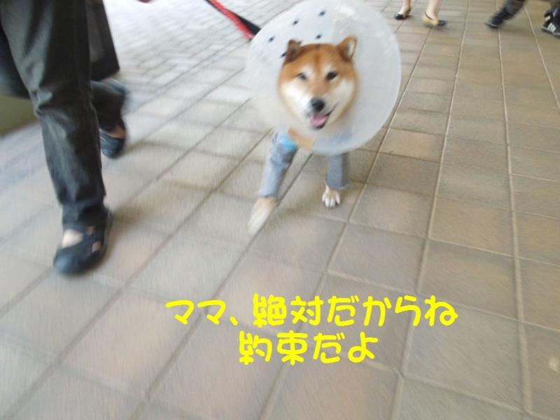 f:id:miyuki1967:20130510164308j:image:w400