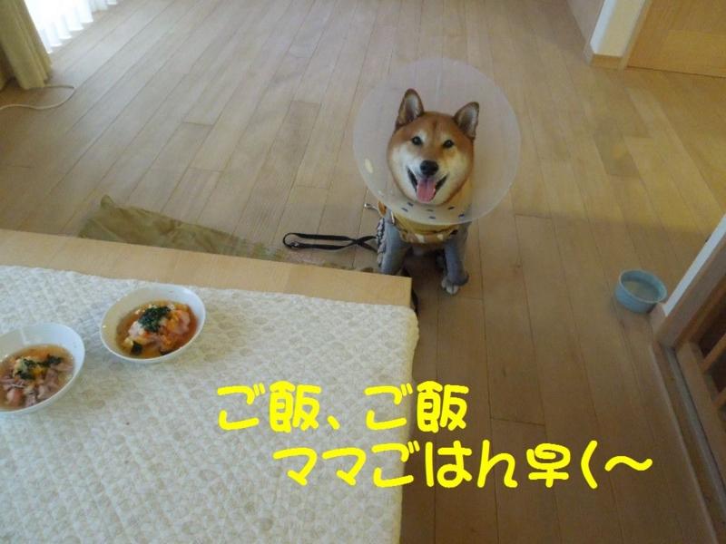 f:id:miyuki1967:20130619114727j:image:w400