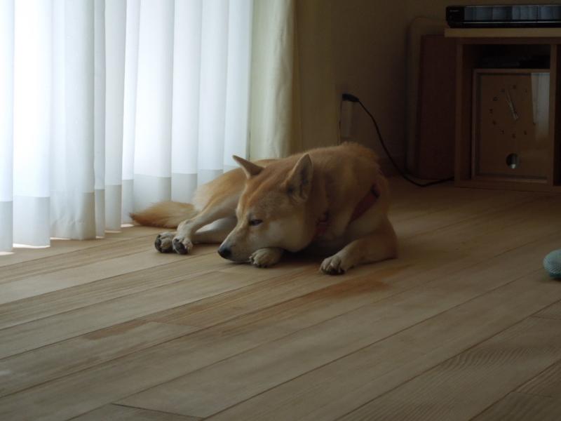 f:id:miyuki1967:20130817111151j:image:w400