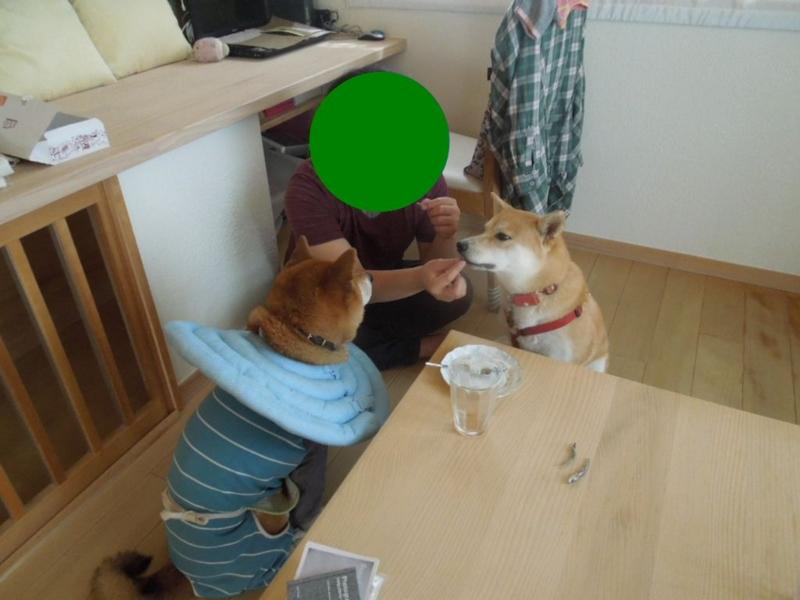 f:id:miyuki1967:20130818064441j:image:w400