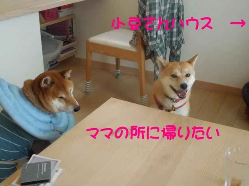 f:id:miyuki1967:20130818065541j:image:w400