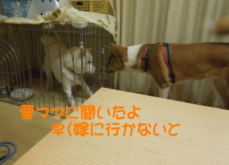 f:id:miyuki1967:20130819104705j:image:w400