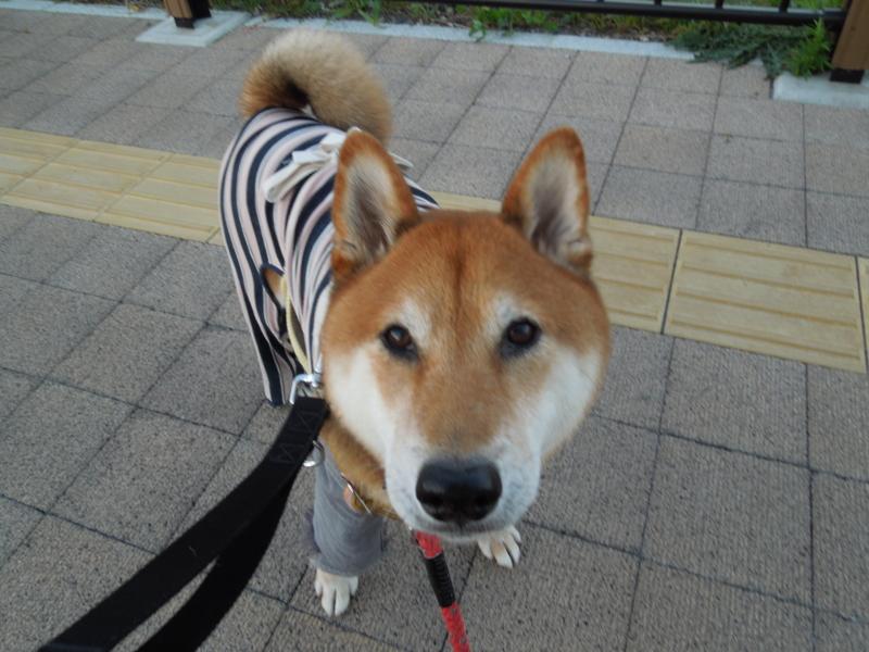 f:id:miyuki1967:20131119062906j:image:w400