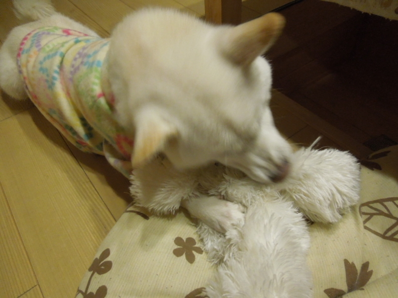 f:id:miyuki1967:20131124205709j:image:w400