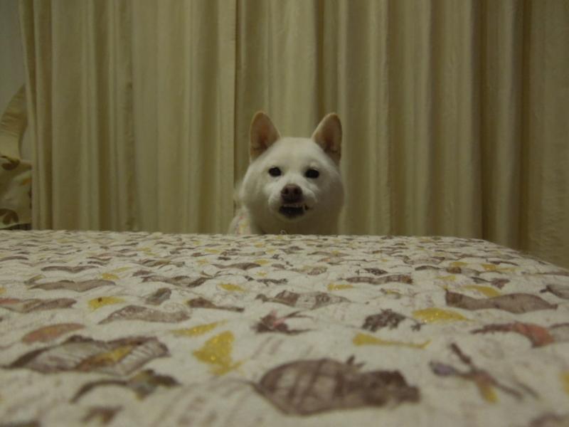 f:id:miyuki1967:20131124210017j:image:w400
