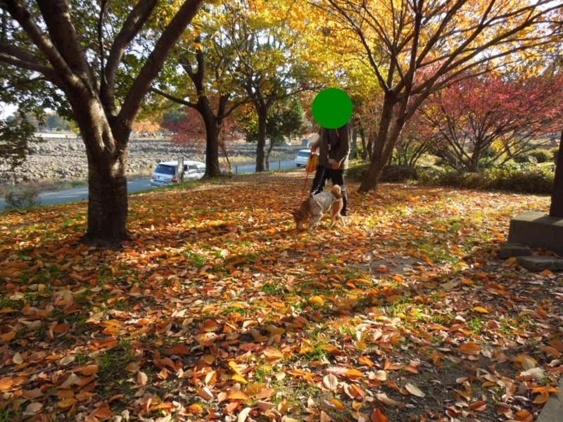 f:id:miyuki1967:20131127101401j:image:w400