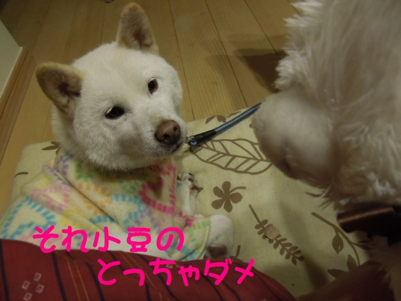 f:id:miyuki1967:20131129124953j:image:w400