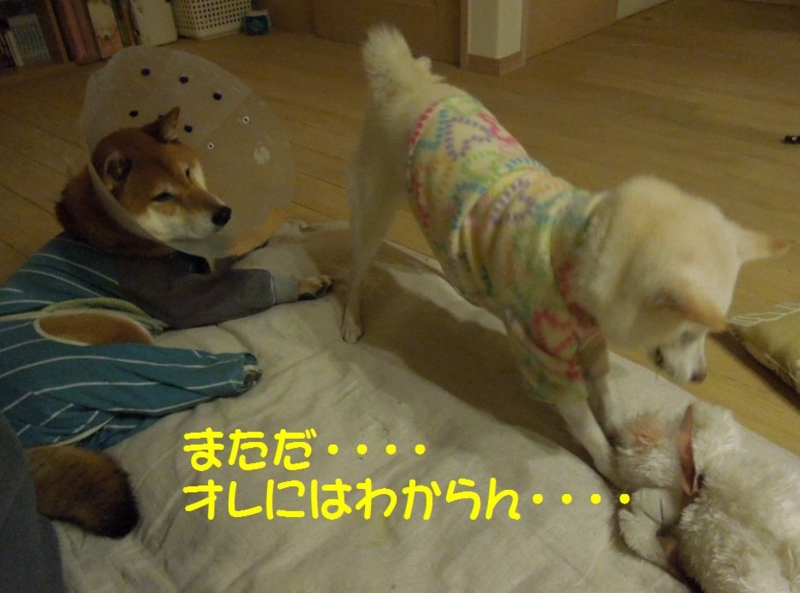 f:id:miyuki1967:20131130121210j:image:w400