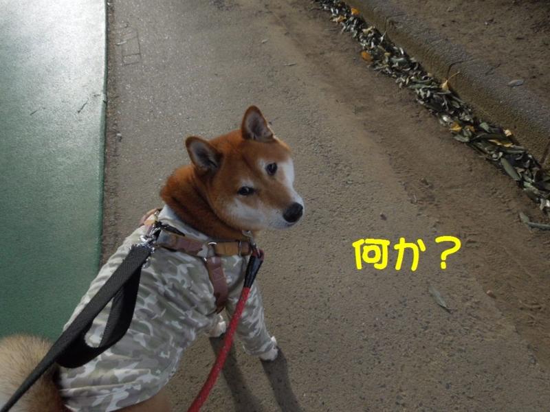 f:id:miyuki1967:20131209094735j:image:w400