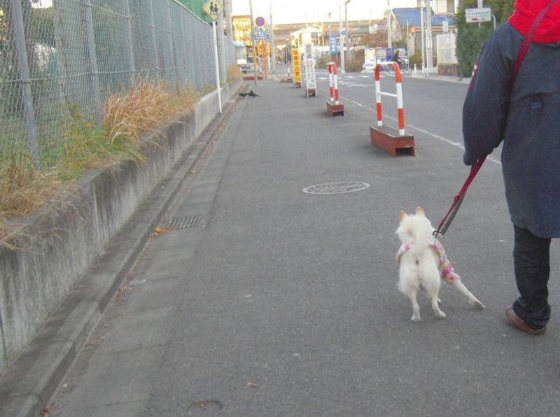 f:id:miyuki1967:20131212110118j:image:w400