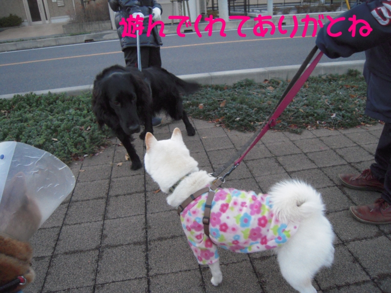 f:id:miyuki1967:20131213114152j:image:w400