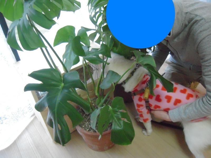 f:id:miyuki1967:20131216102252j:image:w400