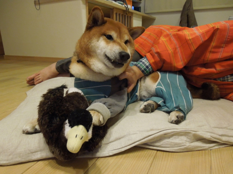 f:id:miyuki1967:20131231204003j:image:w400
