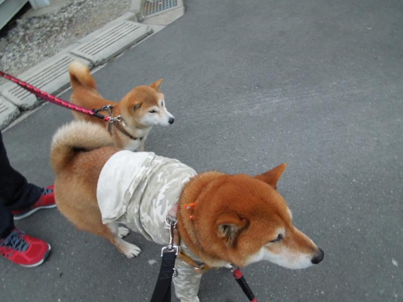 f:id:miyuki1967:20140203064627j:image:w400