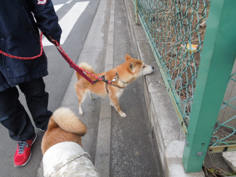 f:id:miyuki1967:20140203065941j:image:w400