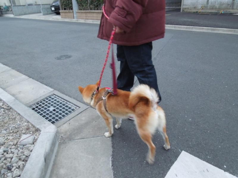 f:id:miyuki1967:20140206064859j:image
