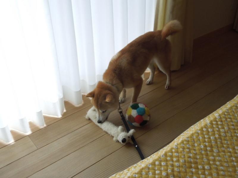 f:id:miyuki1967:20140211105424j:image:w400
