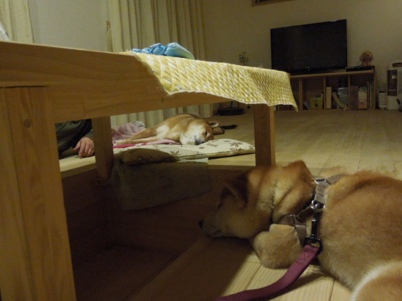 f:id:miyuki1967:20140211212224j:image:w400