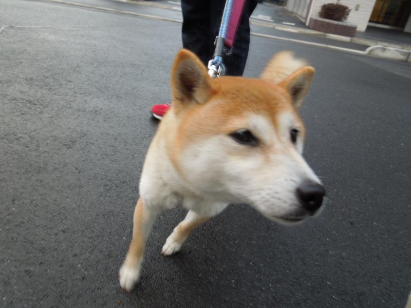 f:id:miyuki1967:20140228064753j:image:w400
