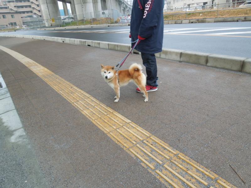 f:id:miyuki1967:20140228064958j:image:w400
