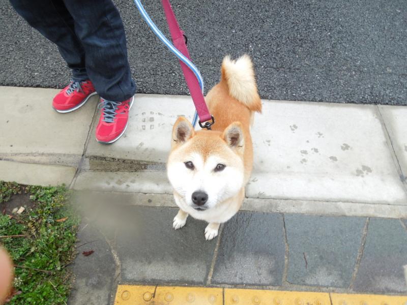 f:id:miyuki1967:20140228065332j:image:w400