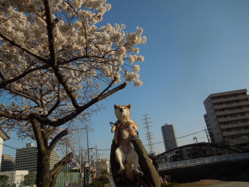 f:id:miyuki1967:20140401065203j:image:w400