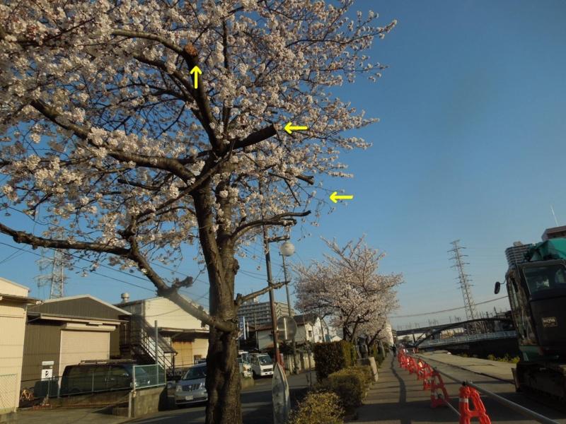 f:id:miyuki1967:20140401102022j:image:w400