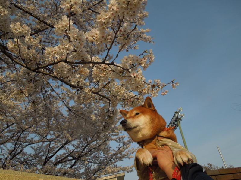 f:id:miyuki1967:20140402065917j:image:w400