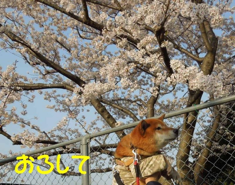 f:id:miyuki1967:20140402103551j:image:w400
