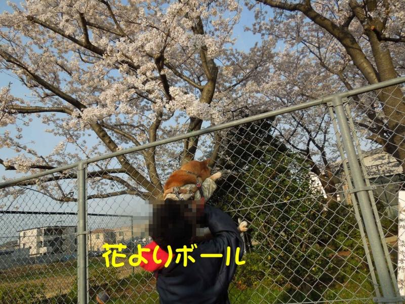 f:id:miyuki1967:20140402103602j:image:w400