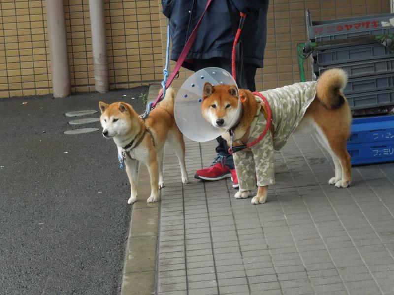 f:id:miyuki1967:20140404064716j:image:w400