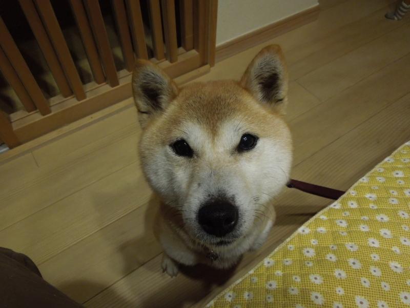f:id:miyuki1967:20140405202238j:image:w400