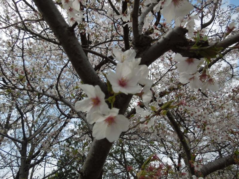 f:id:miyuki1967:20140406124651j:image:w400