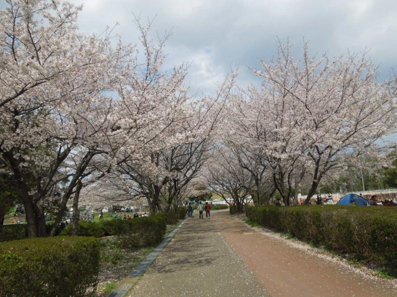 f:id:miyuki1967:20140406124925j:image:w400