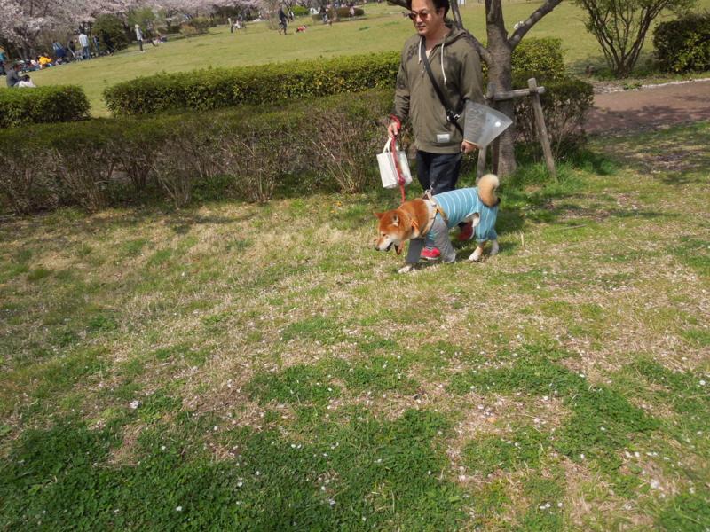 f:id:miyuki1967:20140406125515j:image:w400
