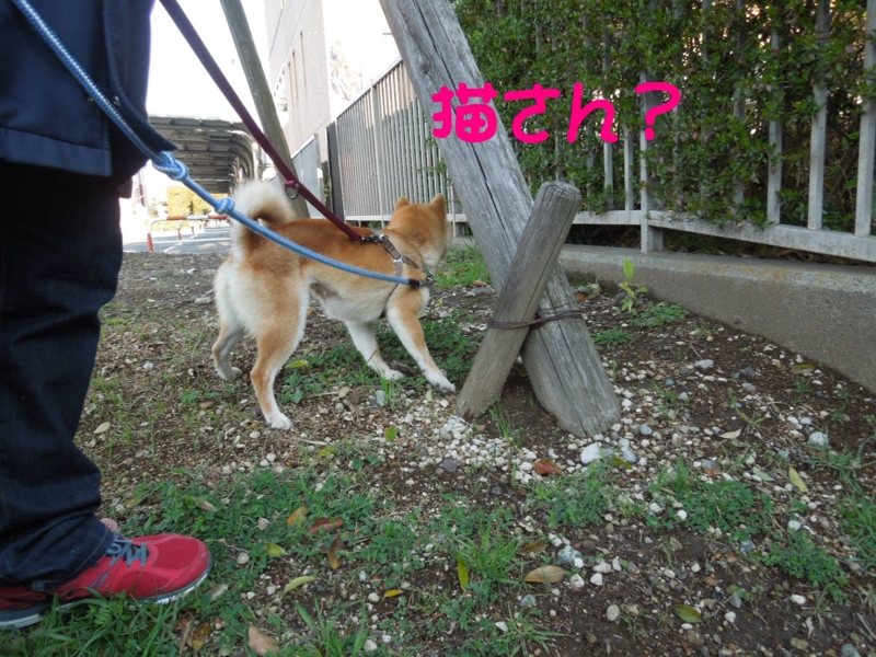 f:id:miyuki1967:20140407115553j:image:w400