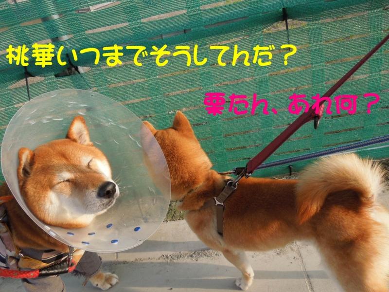f:id:miyuki1967:20140409113259j:image:w400