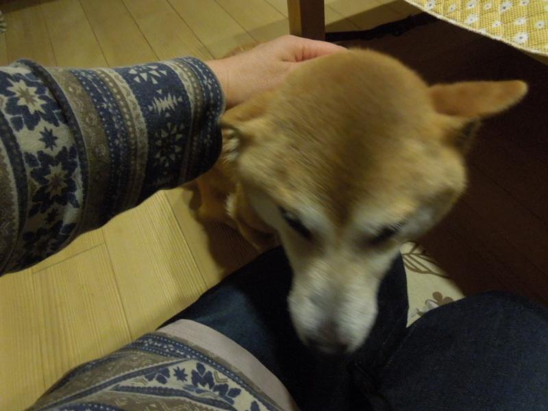 f:id:miyuki1967:20140411222457j:image:w400