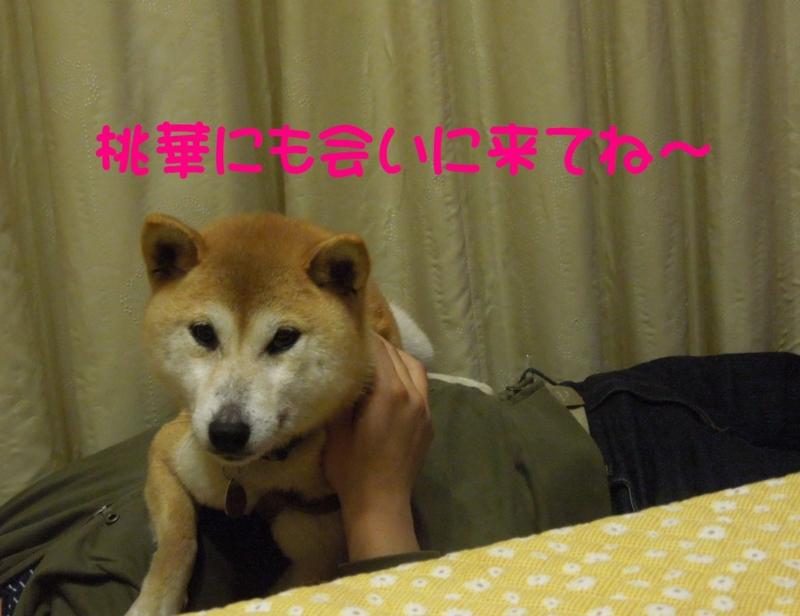 f:id:miyuki1967:20140414100514j:image:w400