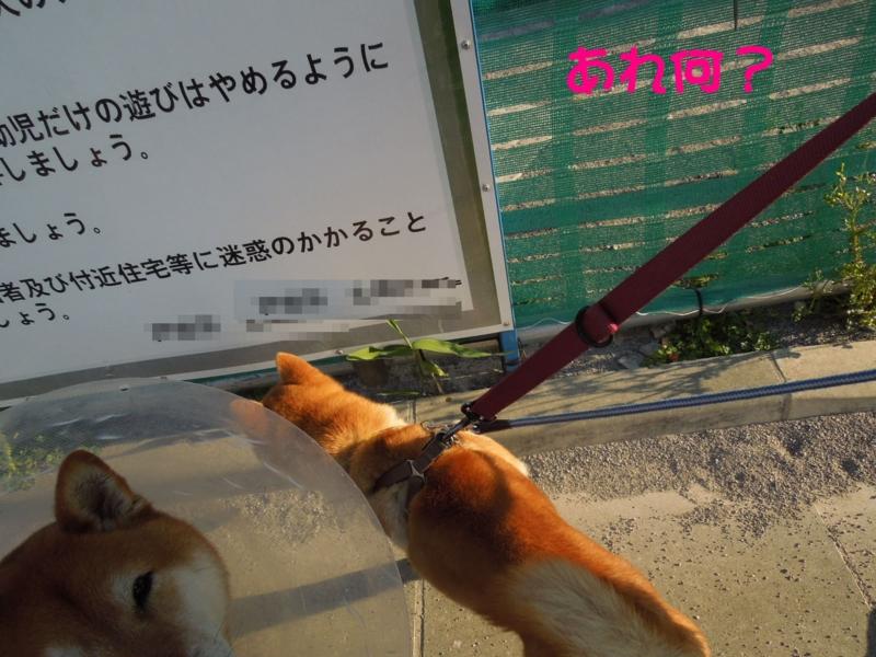 f:id:miyuki1967:20140415104852j:image:w400
