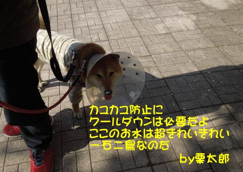 f:id:miyuki1967:20140415131222j:image:w400