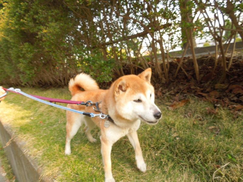 f:id:miyuki1967:20140417065431j:image:w400