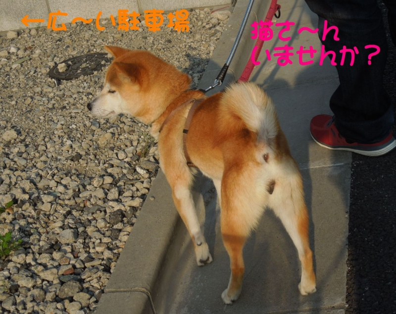 f:id:miyuki1967:20140425112056j:image:w450
